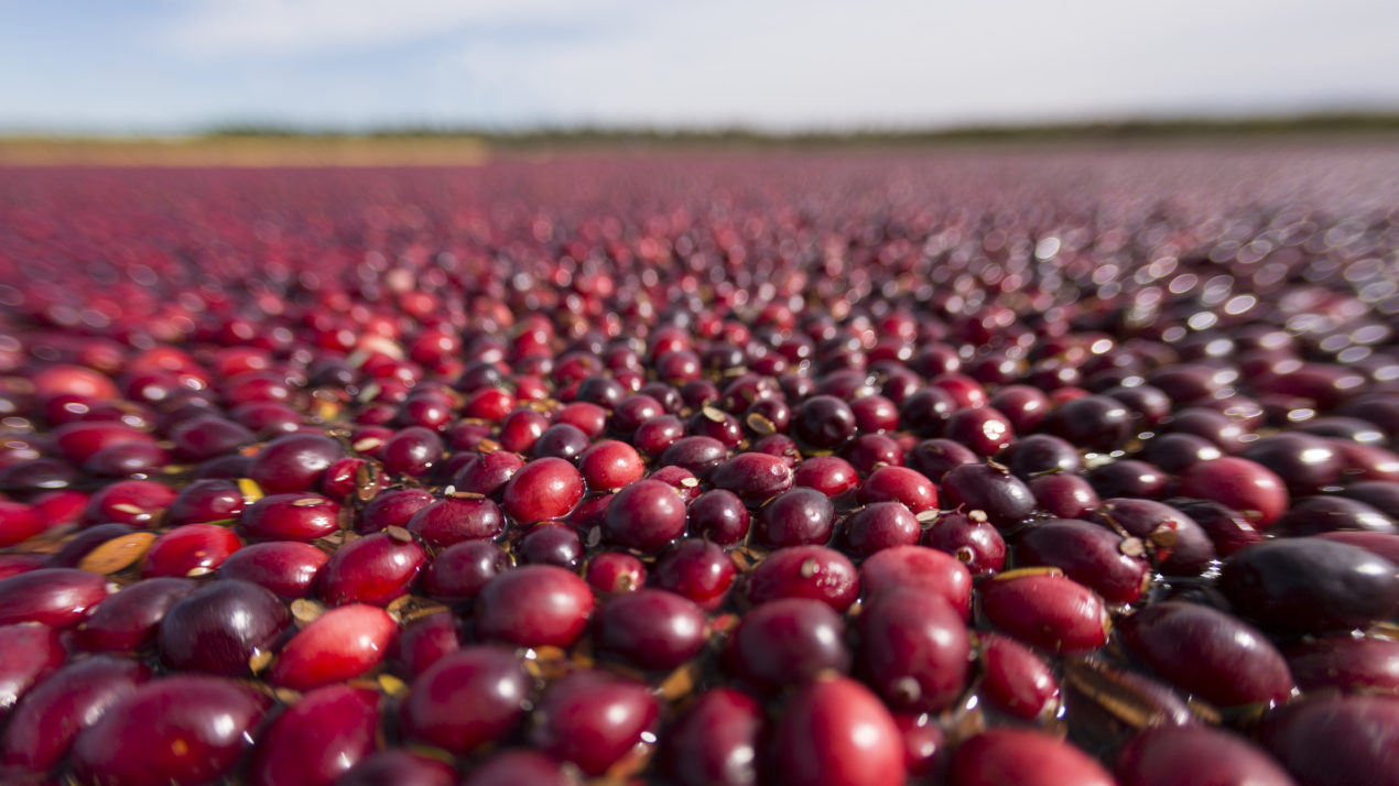 WI Celebrates 25 Years as Top Cranberry Producer