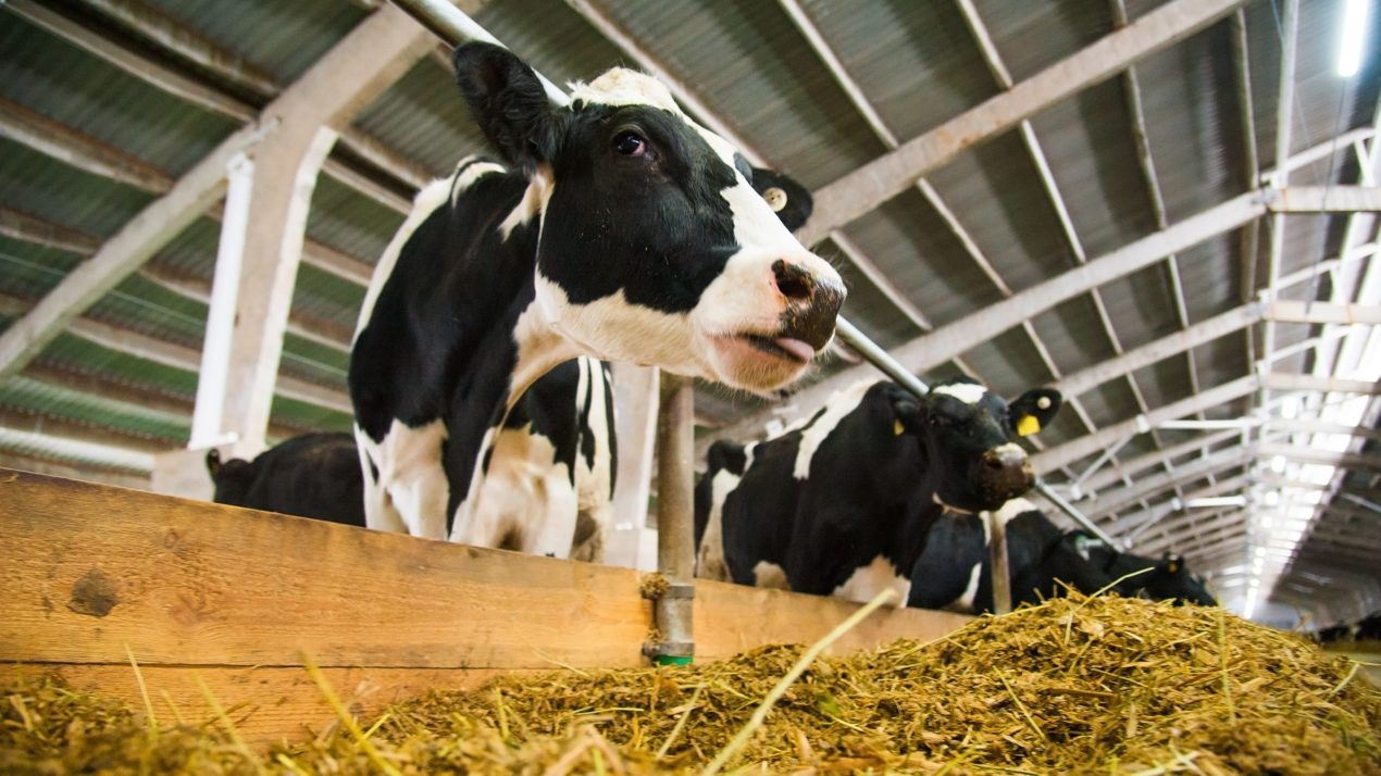 Nearly 17,000 Dairy Operations Enrolled in Dairy Margin Coverage Program