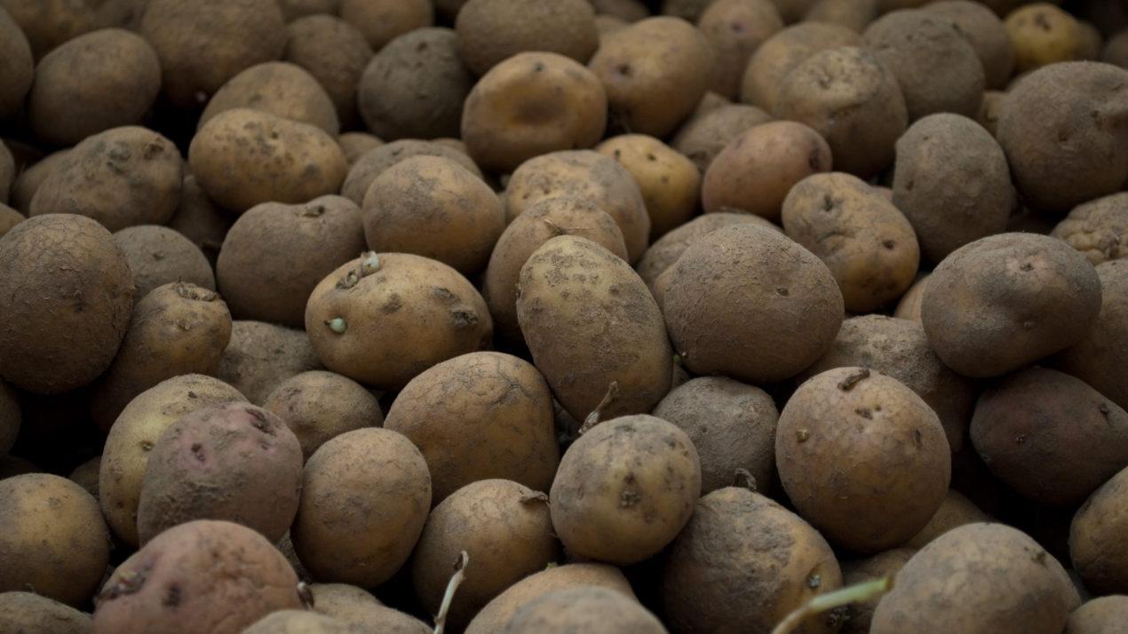 Perez Keeps an Eye on Wisconsin Potato Health