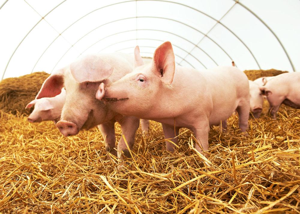 Pork Industry Celebrated During National Pork Month