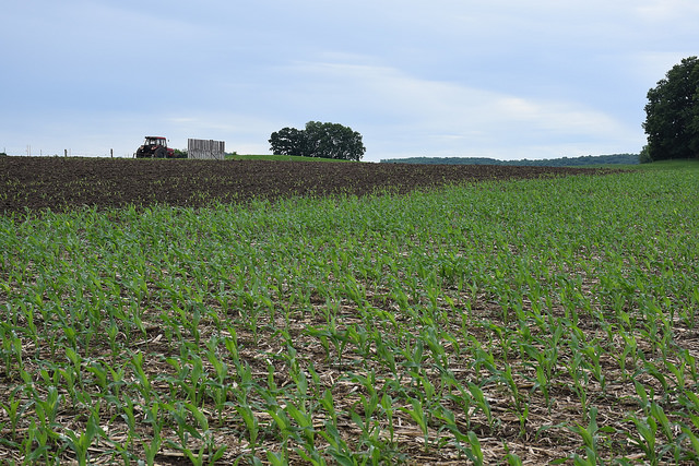 Crop Conditions Improve Slightly As End of May Nears