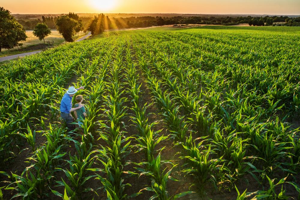 Crop Progress Remains Fairly Steady
