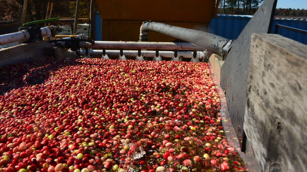 Cranberry Production Totals 4.67 Million Barrels