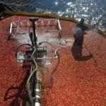 State Cranberry Production Slipped