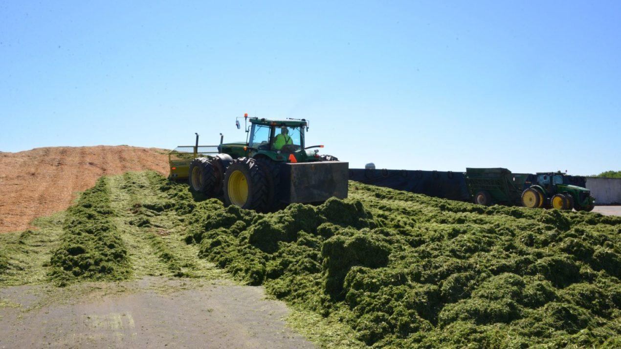 Alfalfa Producers May Qualify