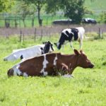 Dairy Grazing Apprenticeship Showcases Diverse Farms and Employment Opportunities
