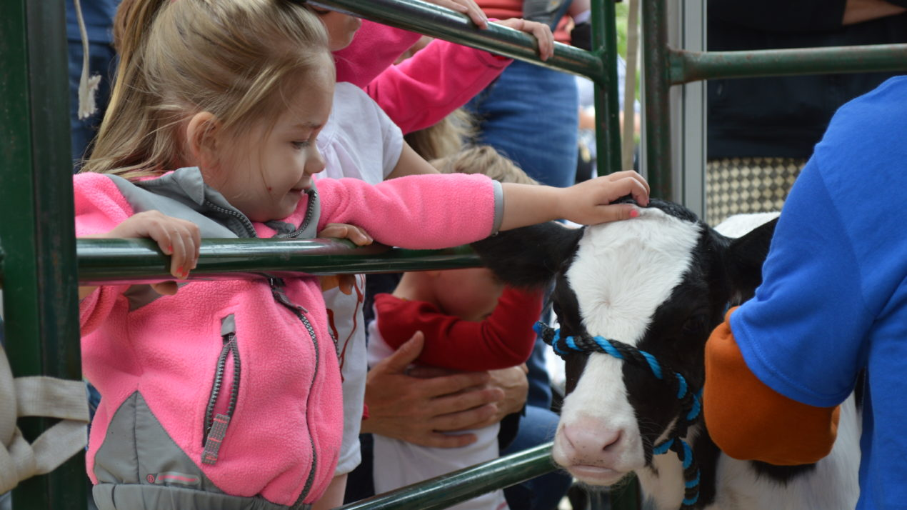 5 Fun Activities To Do With Kids At Cows On The Concourse