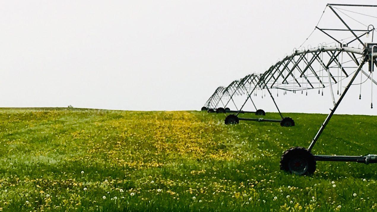 Irrigation gold