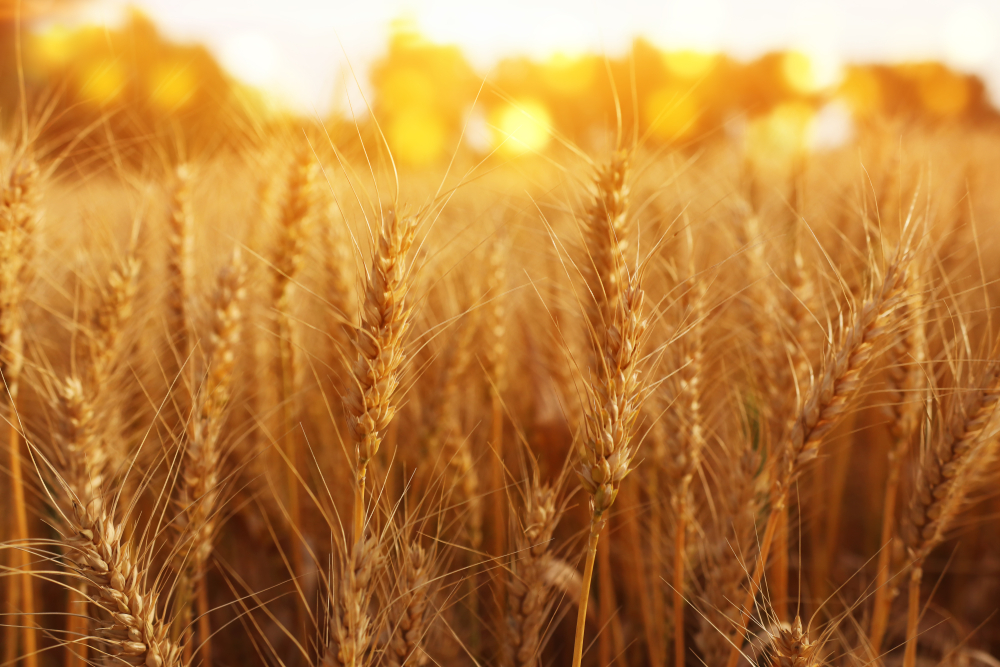 Only Winter Wheat Condition Rises