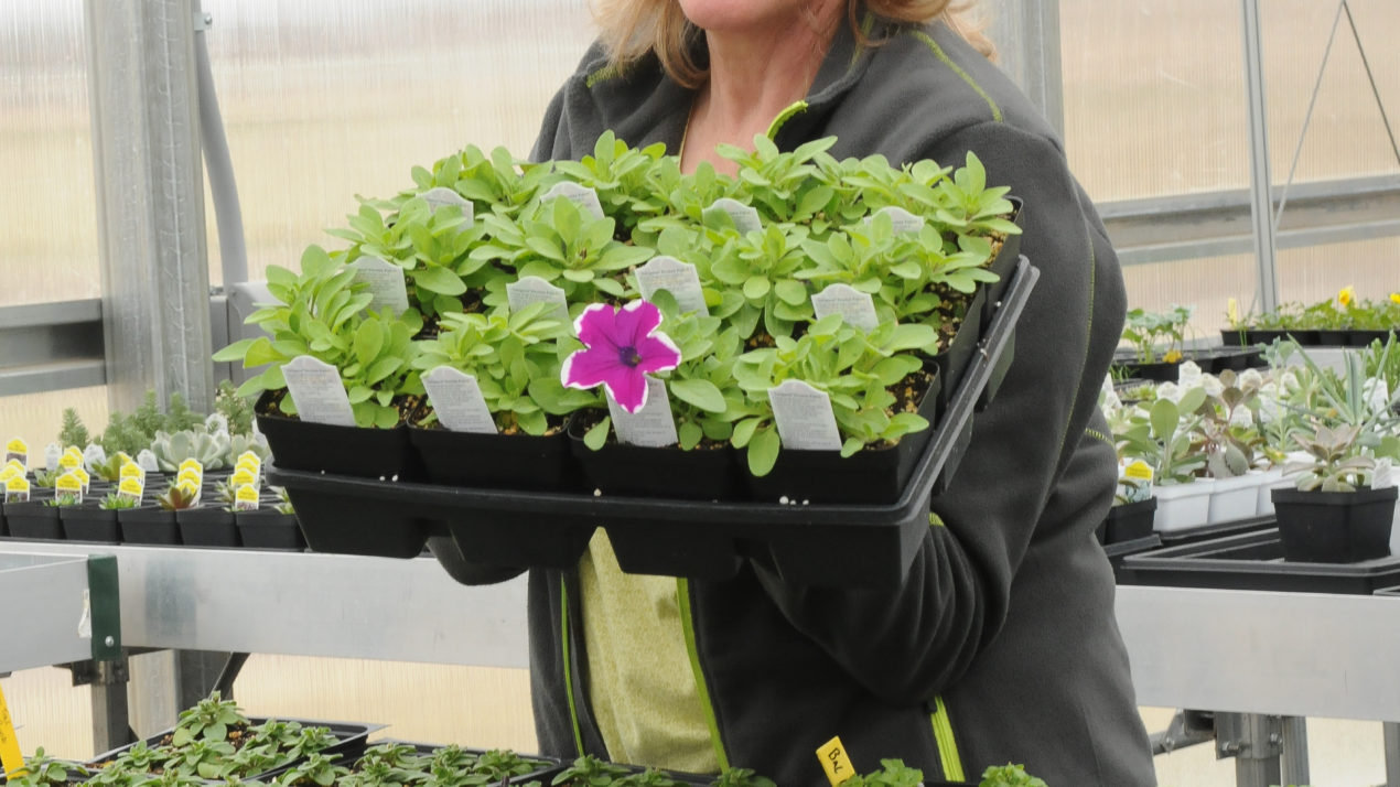 Eau Claire college's teacher, horticulture course named among nation's top programs