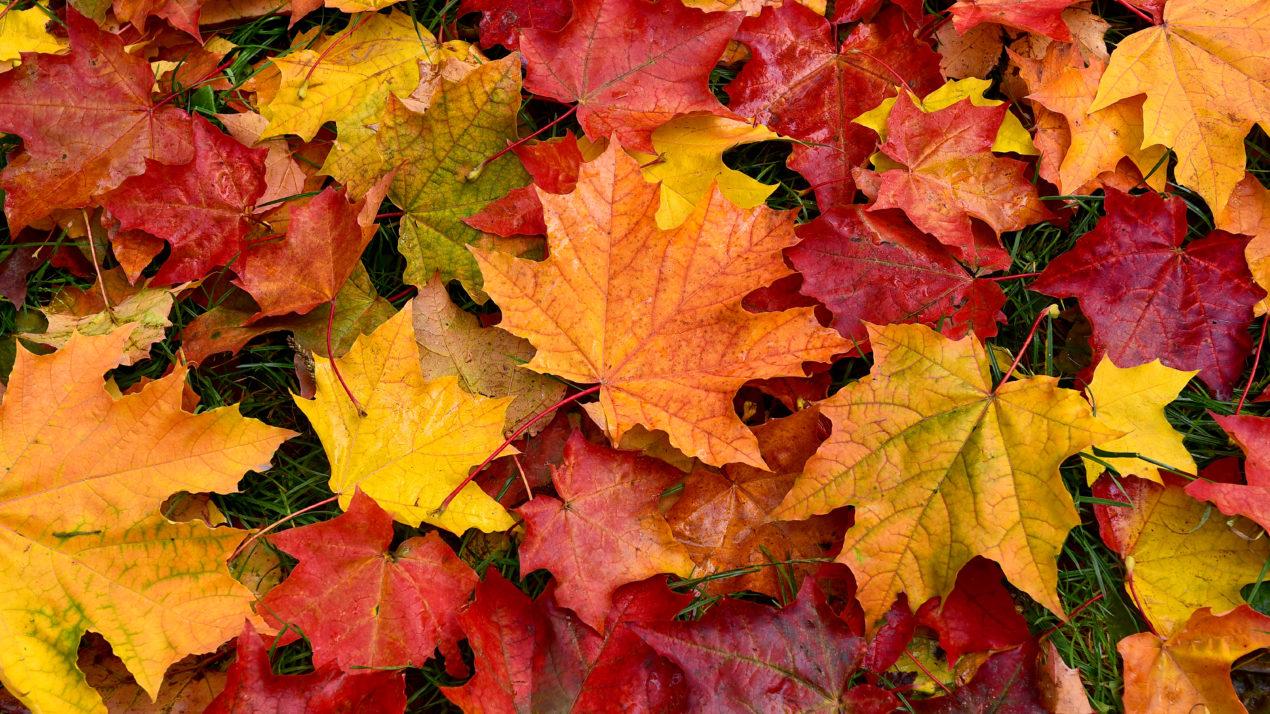 Jump into Fall at Horicon Marsh