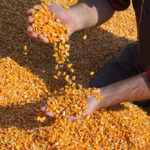 WI Corn Yield Contest Opens