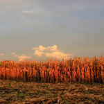 Wet Corn Keeps Propane Demand Strong