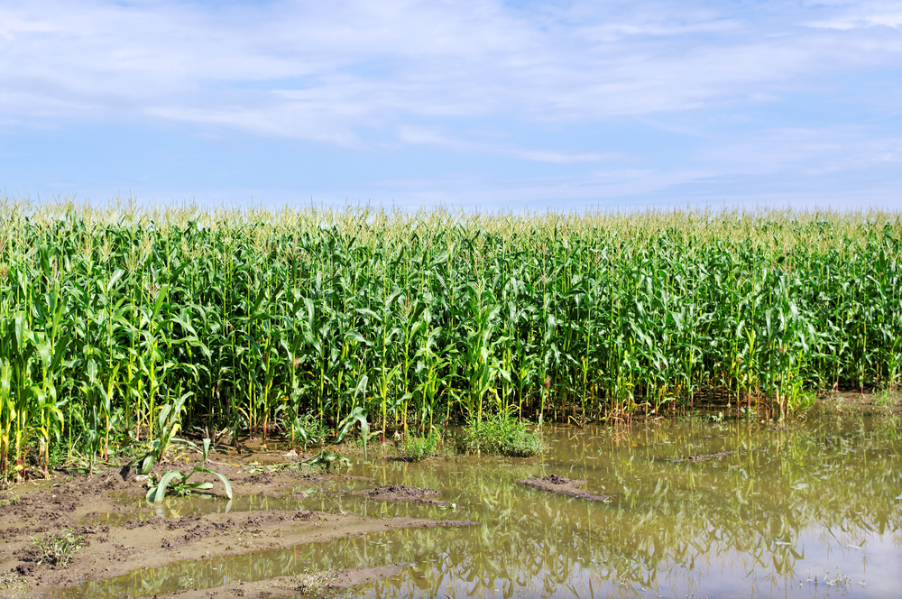 NASS: Weather Having Impact on Crops