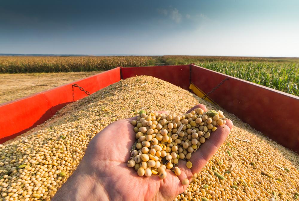 Organic Field Day Highlights Grain
