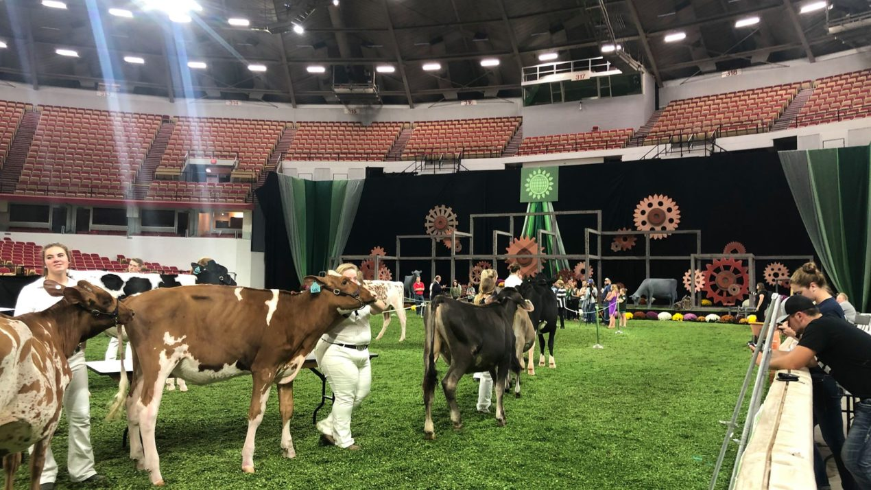 World Dairy Expo moves ahead with plans for 2020
