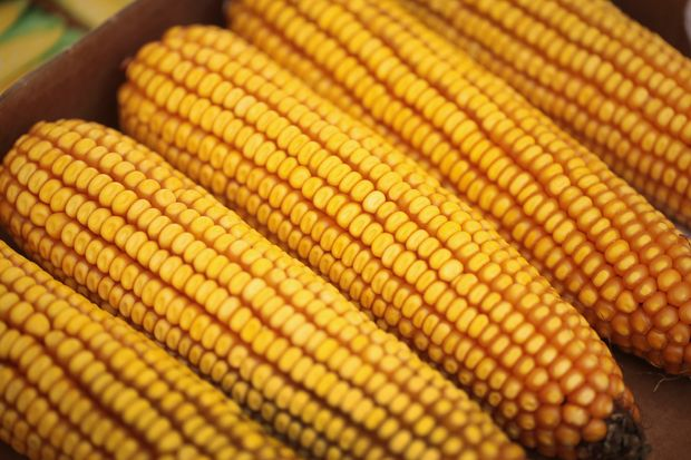 Wisconsin Corn Growers Association statement on Governor's State of the State Address
