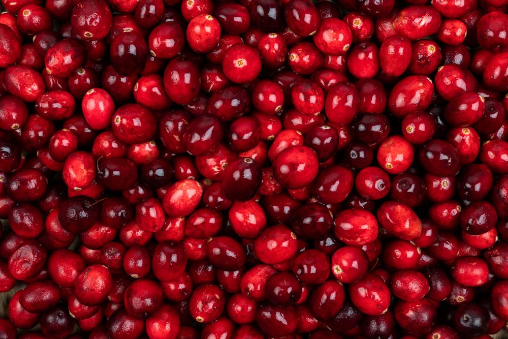 Cranberry Harvest Recap