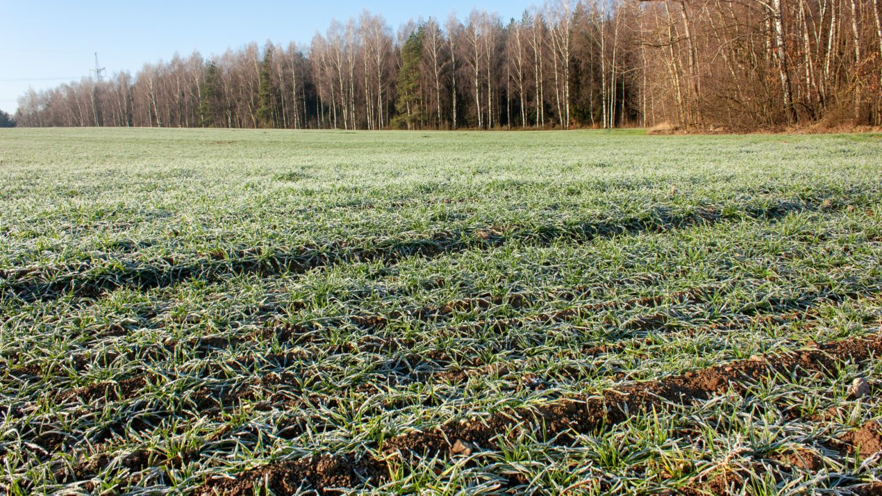 Farmers set to share cover crop success stories