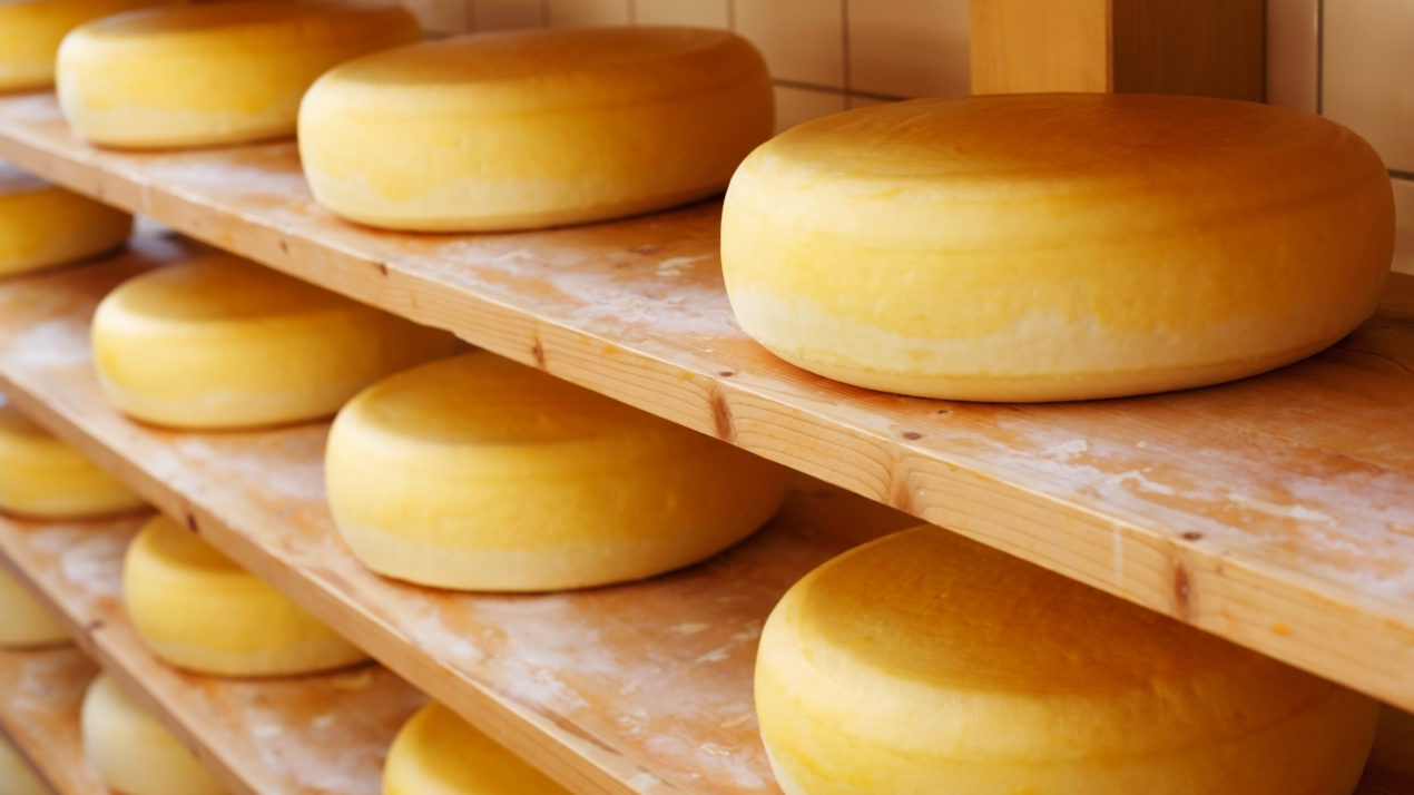 Making Cheese in Wisconsin Since 1883