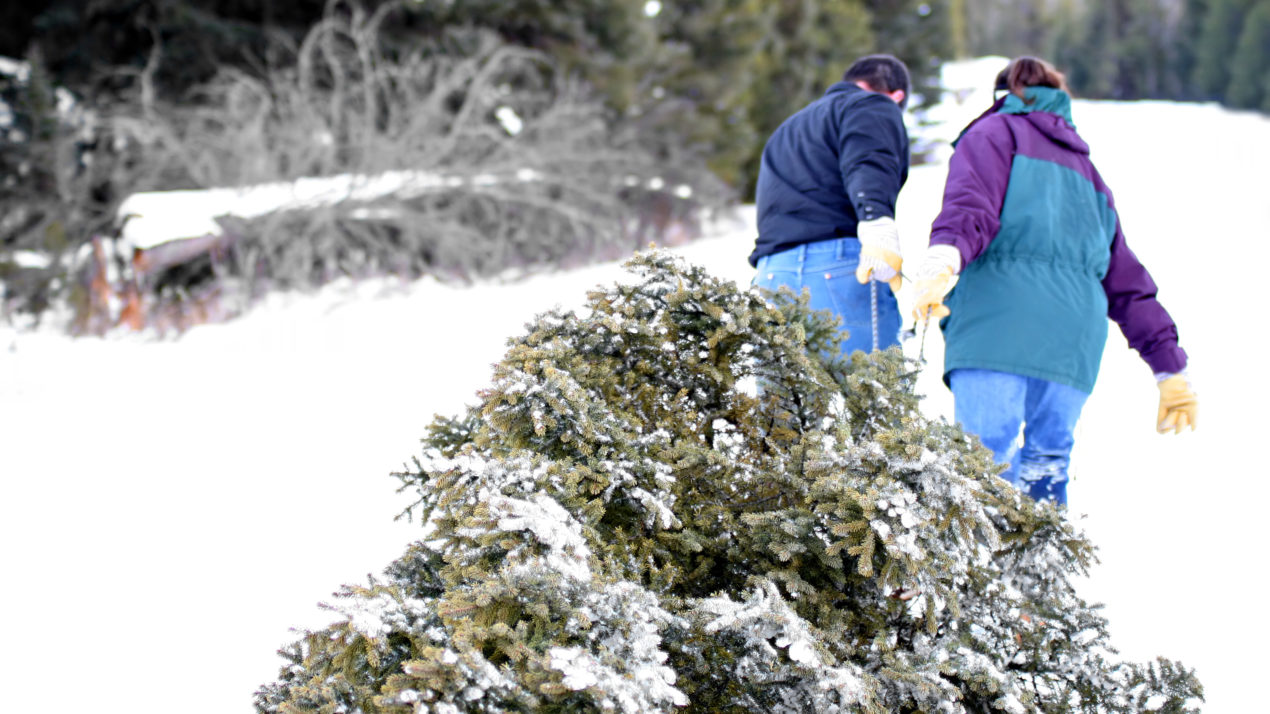 Selecting and Caring for your Real Christmas Tree