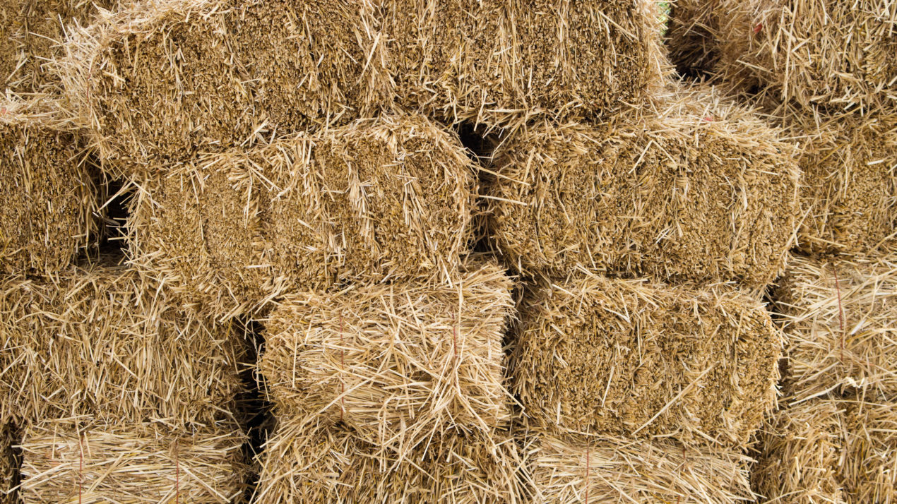 Hay Shortage Puts Farmers in a Pinch
