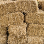 Hay Shortage Puts Farmers in a Pinch
