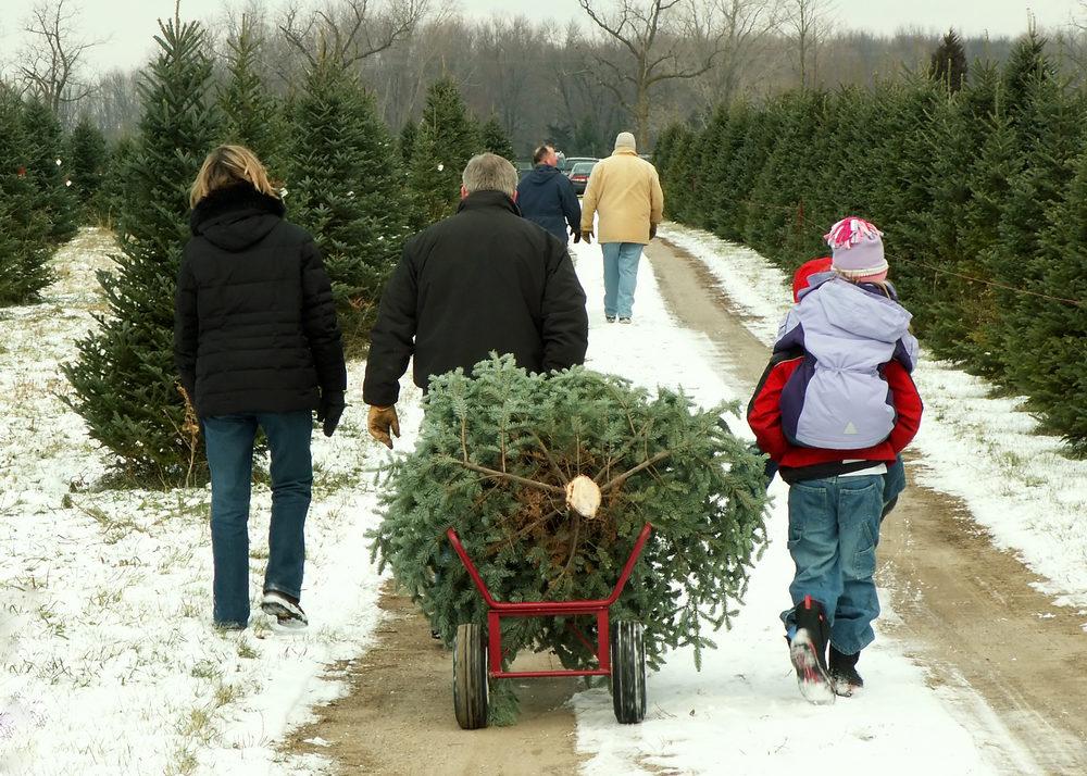 Christmas Tree Season