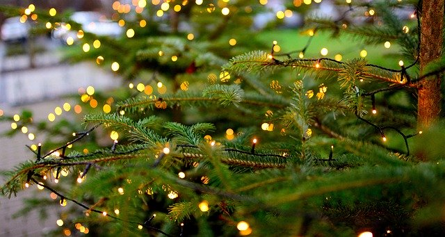 Experts encourage proper Christmas tree disposal for environmental protection