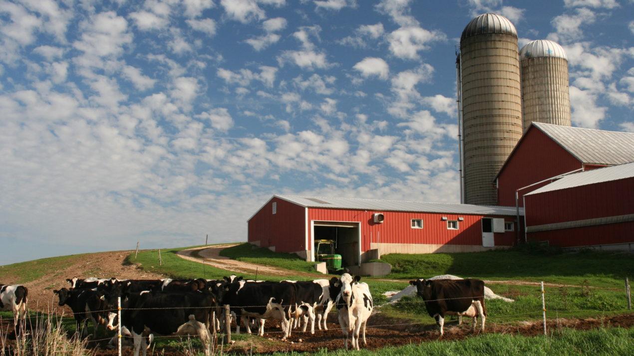 Deadlines for Dairy Margin Coverage, Market Facilitation Programs Extended