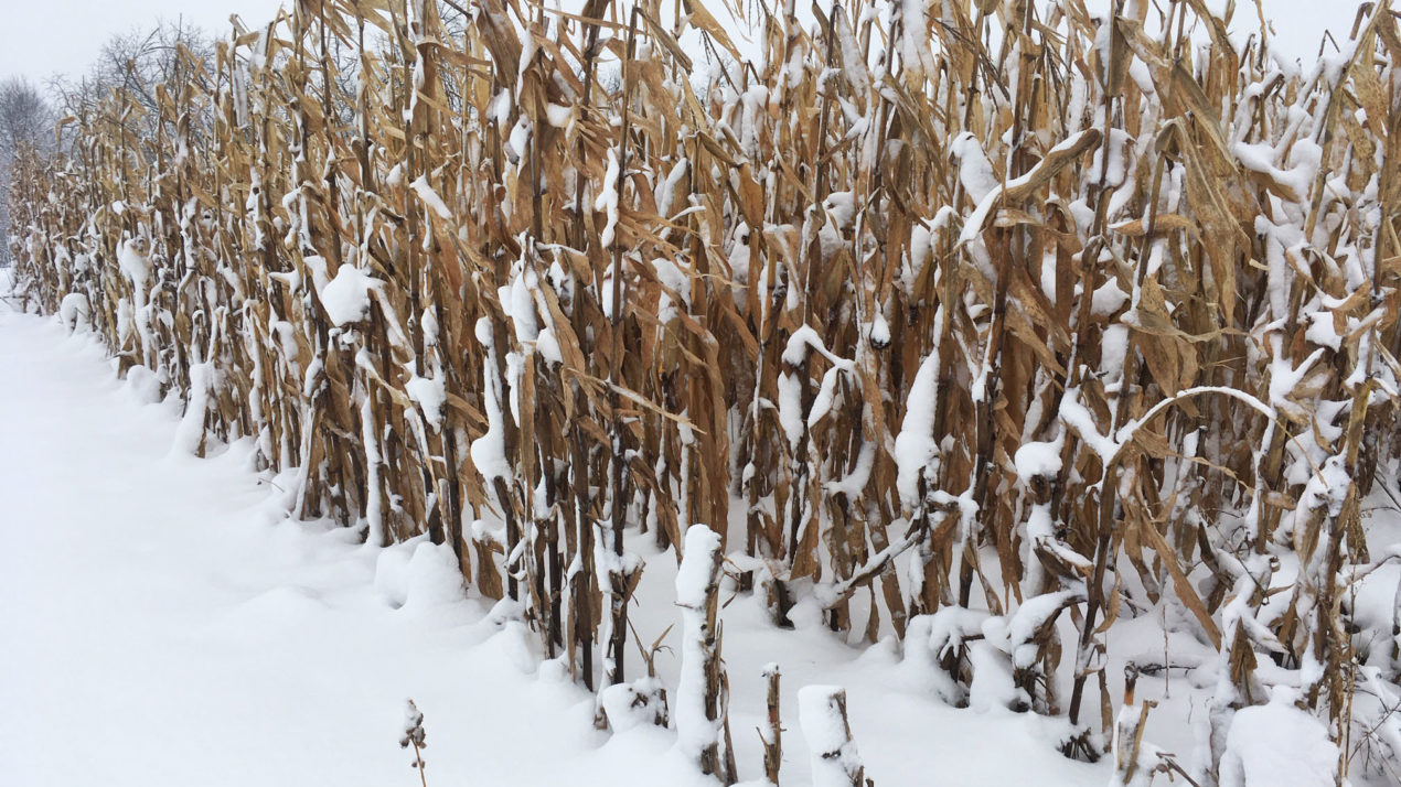 USDA to re-survey corn, soybean farmers in spring