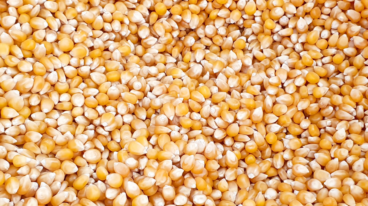 2019 Wisconsin Crop Production Report Released