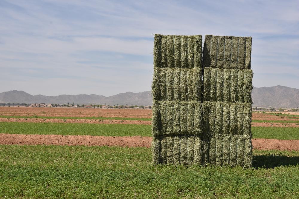 Hay Quality