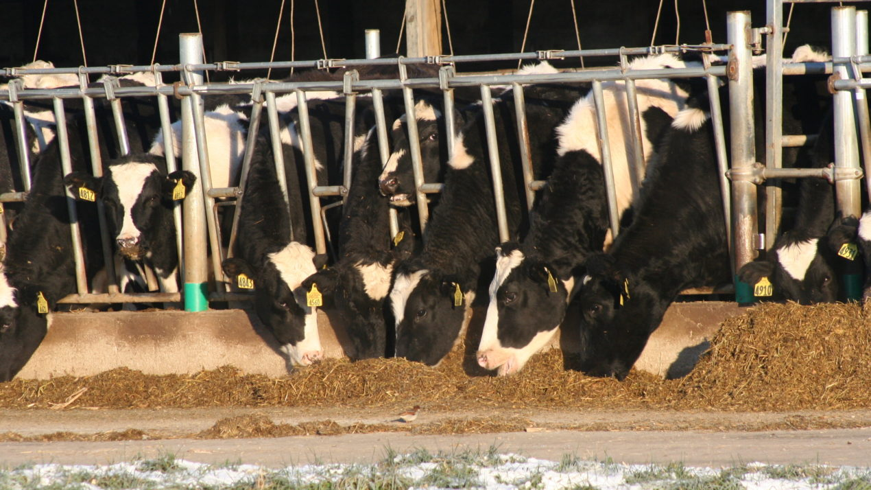 Cooperative Commends Bipartisan Support for Farmer Relief, Applauds Dairy Farmers