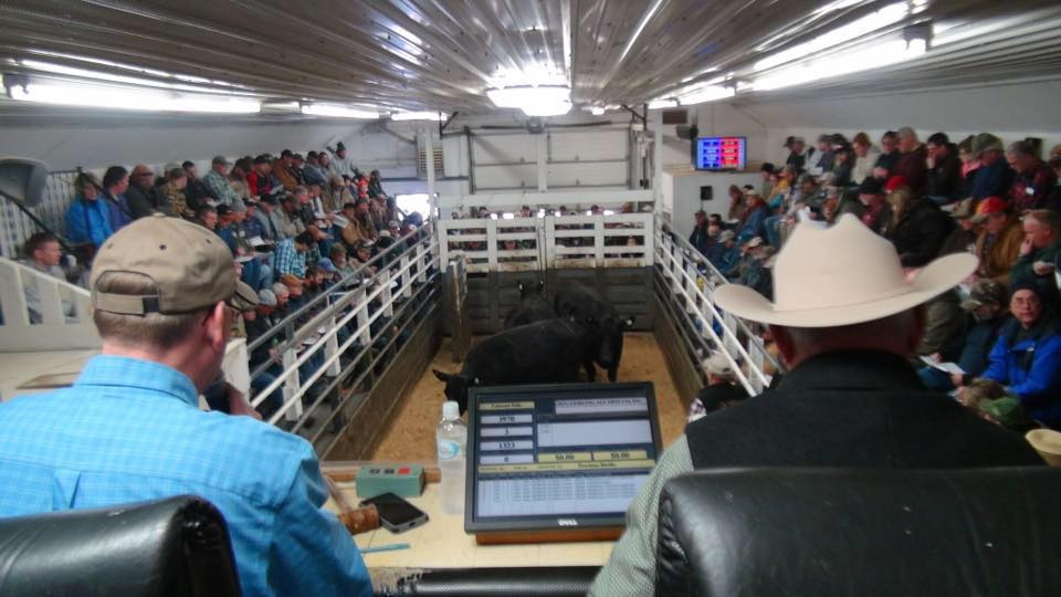 Lanesboro Sales Commission sees positive movement in beef