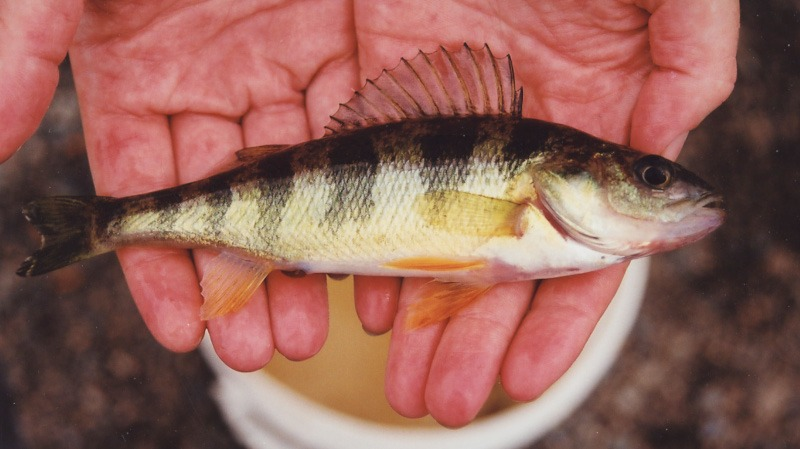 Fish Farms Seek Renewal Of Permits To Operate In Public Waters