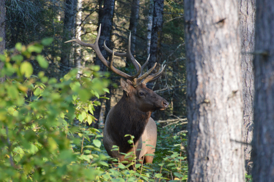 Four Lucky Winners In States 2020 Elk Hunt