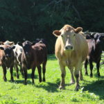 Researcher outlines unique components of animal welfare from bored livestock to labor shortages