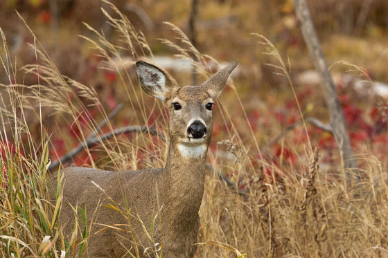 Burnett County Deer Farm Tests Positive for CWD