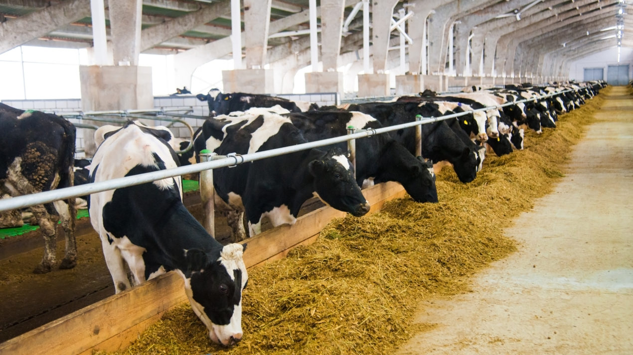 Global Dairy Tech Start-up Spotlight Introduced to Industry