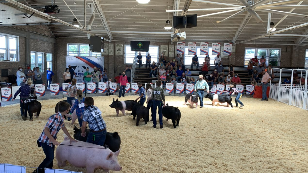 A Successful Rock County Youth Expo Swine Show