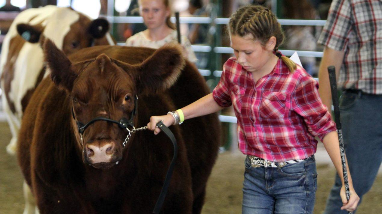 Youth livestock expo provides Dodge Co. youth with socially-distanced way to show projects