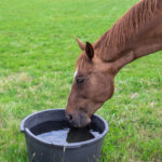 Keep Your Animals Cool and Avoid Heat Stress as Temps Climb