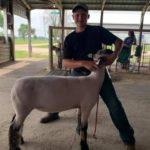 Dodge County Livestock Show Brings Weekend of Normalcy for Fair Kids