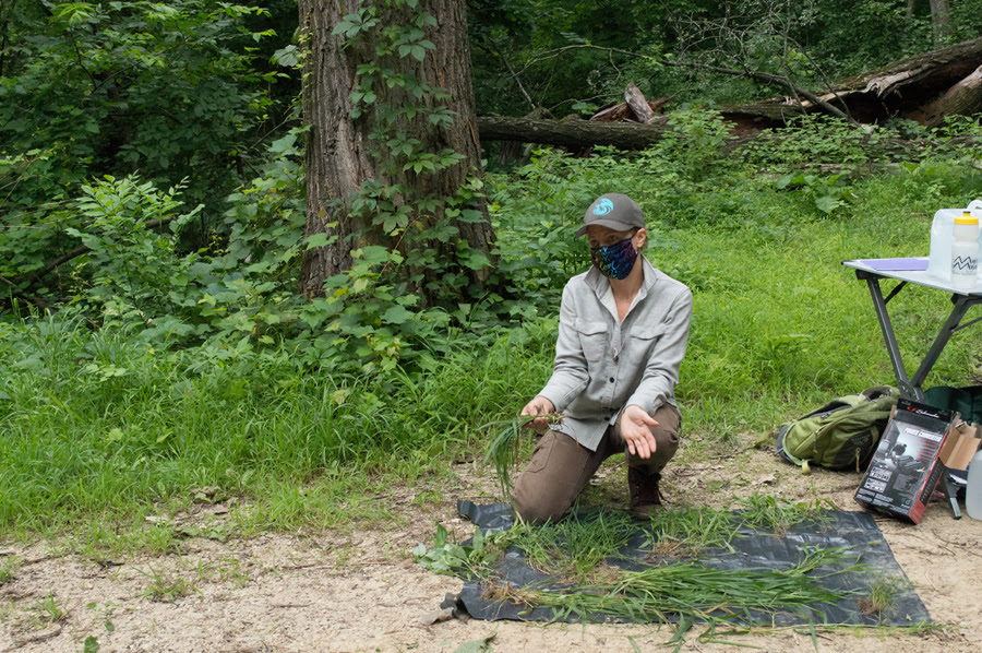 Botanists Identify – And Contain – A New Invasive Grass In Wisconsin