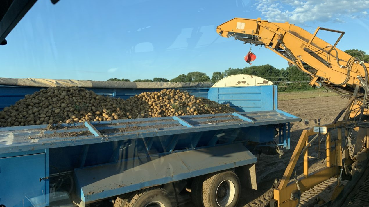 State's Potato Industry Grows in Acres and Revenue