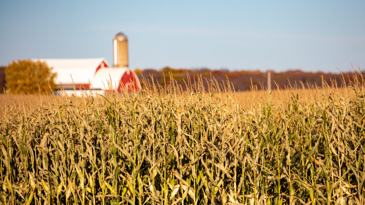 Crops Continue to Click as October Approaches