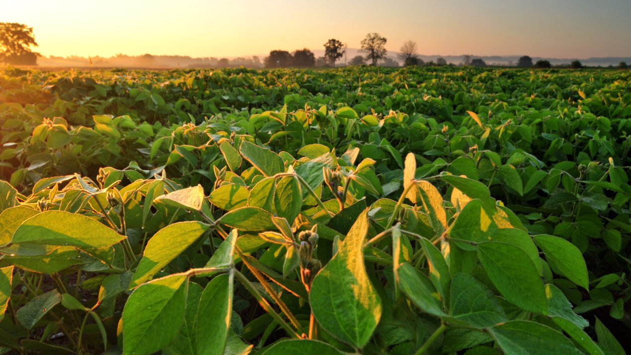 Wisconsin Soybeans Could Have A Record-Breaking Year
