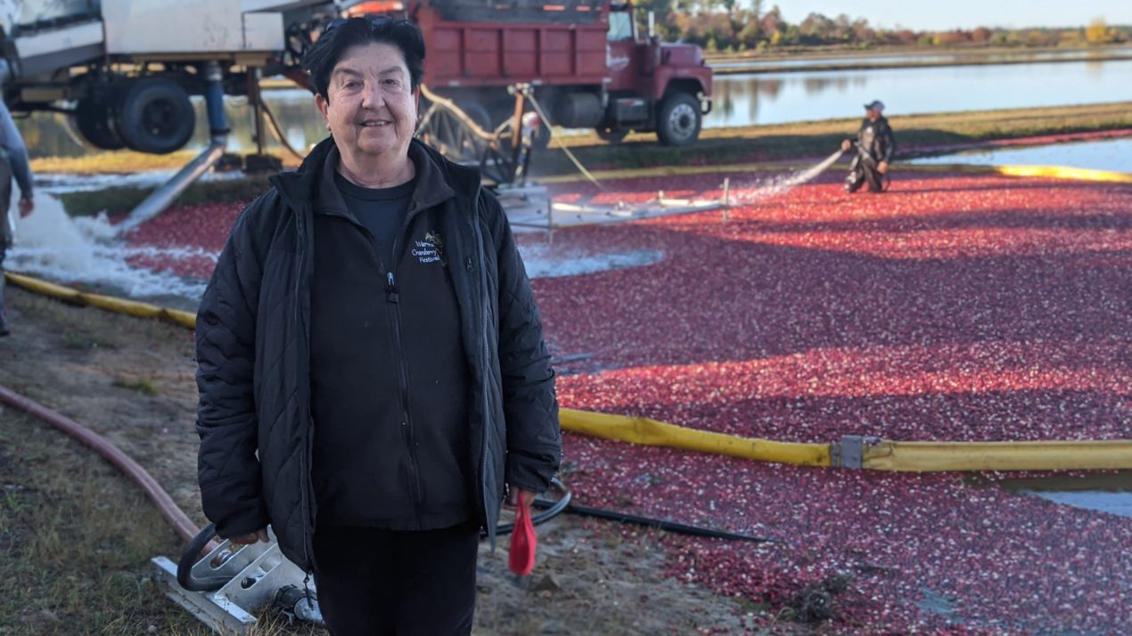 Wisconsin cranberry growers are optimistic for an excellent harvest and new health studies