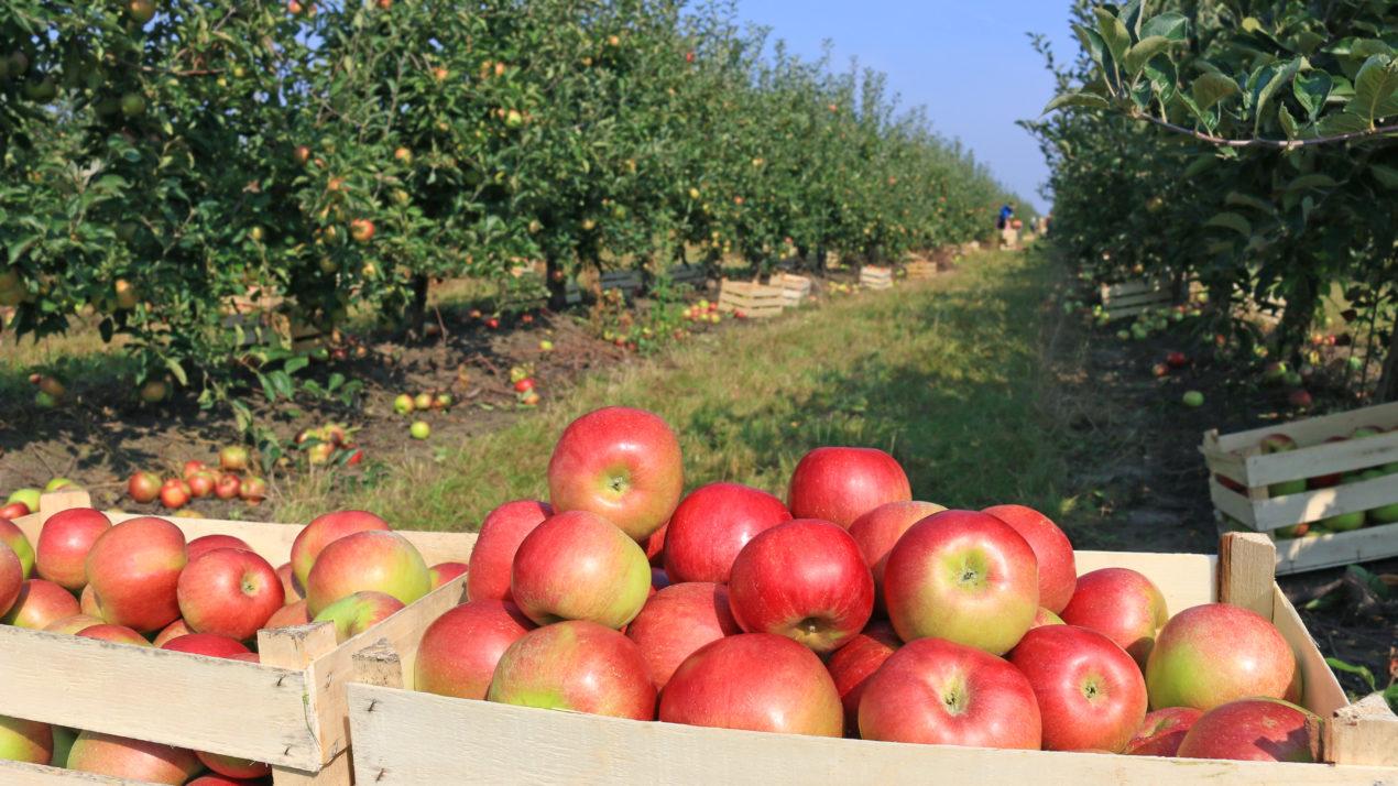 Virtual Apple Orchard Tour, Annual 'Crunch' Highlight Wisconsin Farm to School Efforts